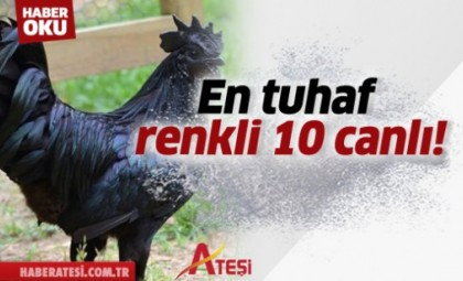 En tuhaf renkli 10 canlı!
