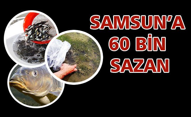 Samsun'da iç sulara 60 bin sazan yavrusu bırakıldı