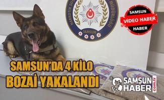 Samsun'da 4 Kilo Bonzai Yakalandı