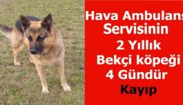 Hava Ambulans Servisinde 2 Yıllık Bekçi köpeği 4 Gündür Kayıp