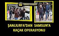 Şanlıurfa'dan Samsun'a Kaçak Operasyonu : 6 Gözaltı