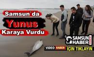 Yunus Balığı Samsun'da Sahile Vurdu