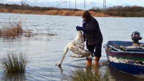 Bafra'da 150 kümes hayvanı itlaf edildi