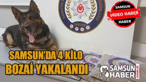 4 Kilo Bonzai İle Yakalandılar